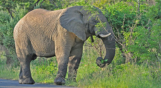 Elephant Sighting Hluhluwe iMfolozi uMfolozi Game Reserve Mpila Camp Directions Self-Catering Accommodation