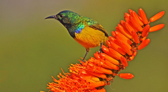 Sunbird Hluhluwe iMfolozi Game Reserve Mpila Camp Directions Self-Catering Accommodation